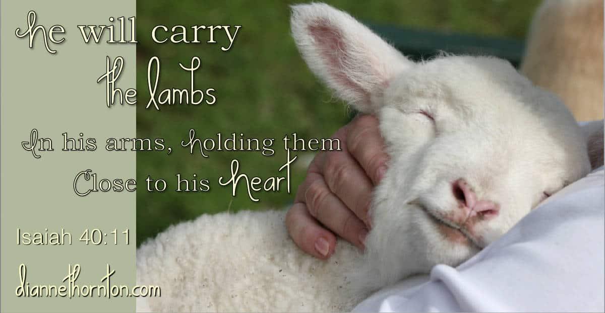 A Little Loved Lamb Sweeter Than Honey