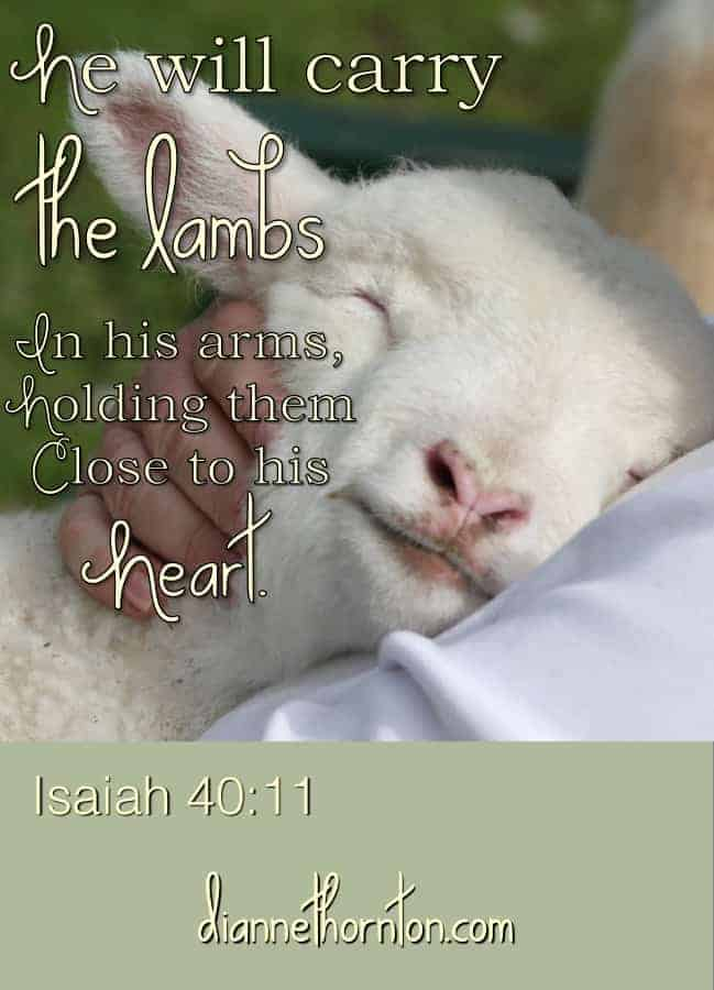 Do you realize how tenderly you are loved? Like a little loved lamb, the Lord cares for you and delights in you!