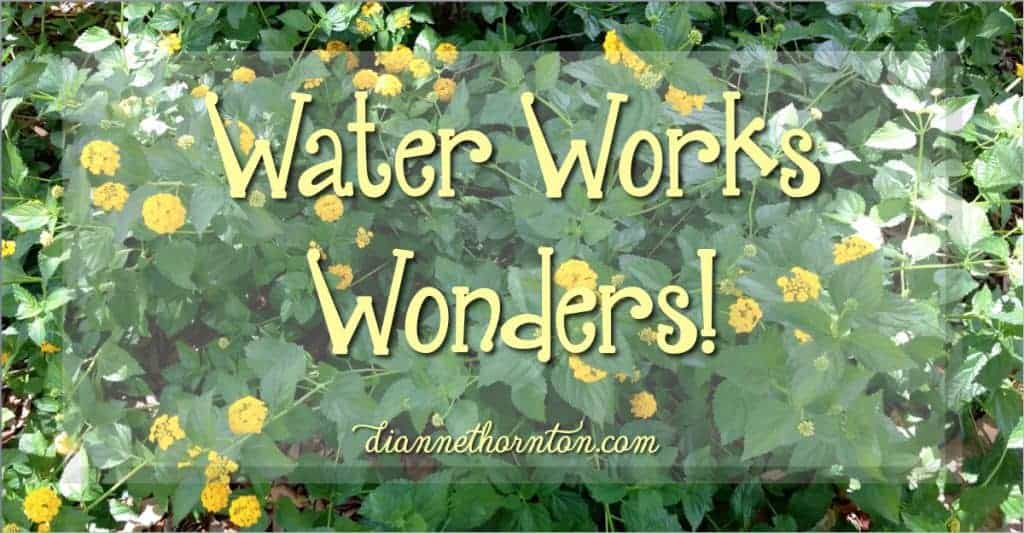 Without the water of the Word, our hearts become dry and crusty. Water works wonders! A little bit of water every day, and we begin to thrive!