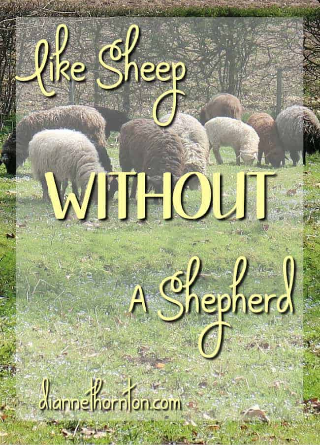 How is life going for you? Are you focused on your plan? Have you got it figured out? Or are you lost? Without Christ, we are like sheep without a shepherd.