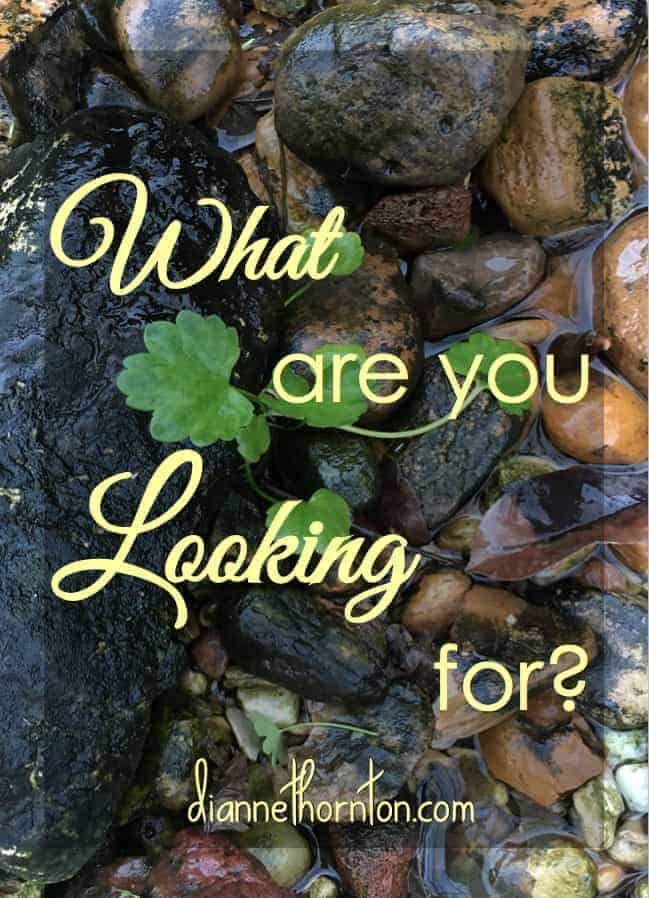 What are you looking for? Something tangible? Or something out of reach? Have you considered that Jesus came to give you exactly what you are looking for?